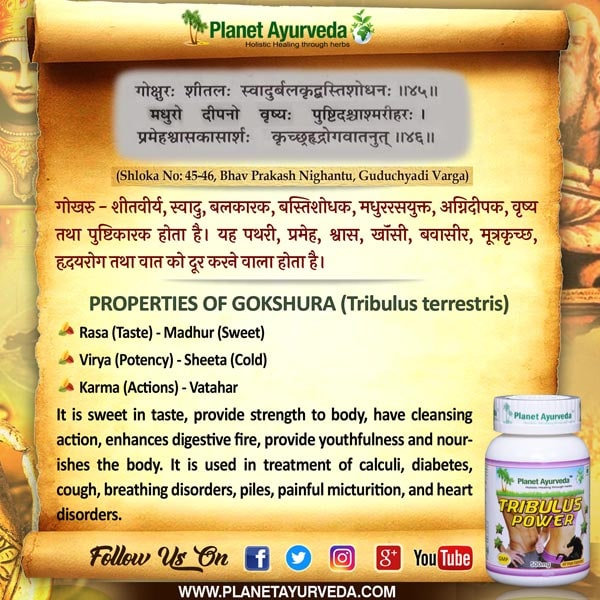 Classical Reference of Gokshura, Tribulus terrestris